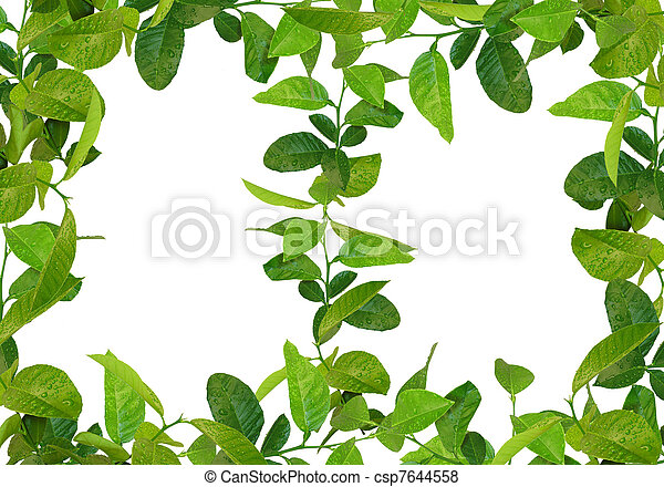 Green leaves frames pictures - Search Photographs and Photo Clip Art ...
