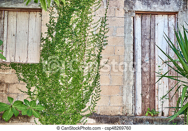 Green leaves growing on a brick wall - csp48269760