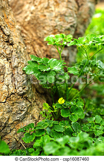 Green leaves in the garden - csp16087460