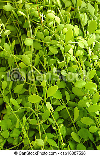 Green leaves in the garden - csp16087538
