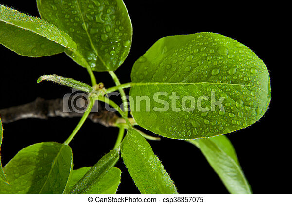 green leaves in water drops - csp38357075