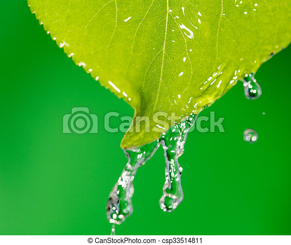 Green leaves in water - csp33514811
