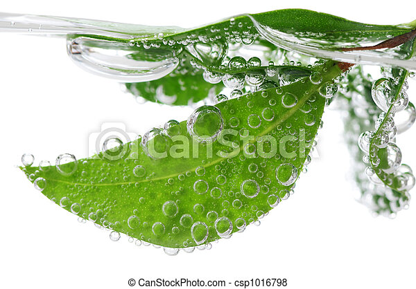 Green leaves in water - csp1016798