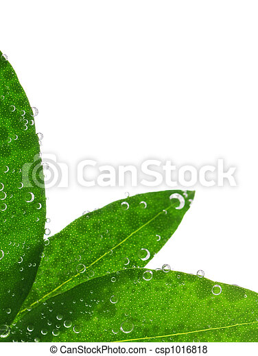 Green leaves in water - csp1016818