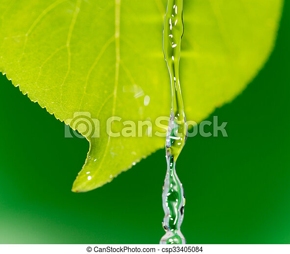 Green leaves in water - csp33405084