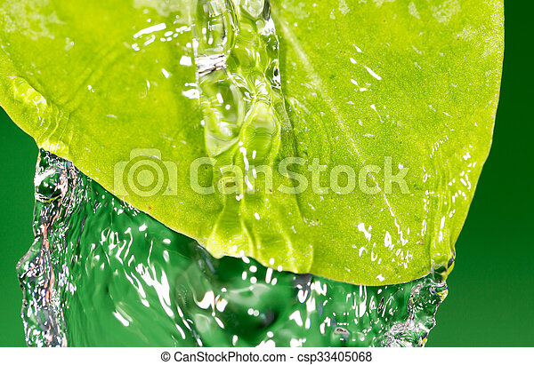 Green leaves in water - csp33405068