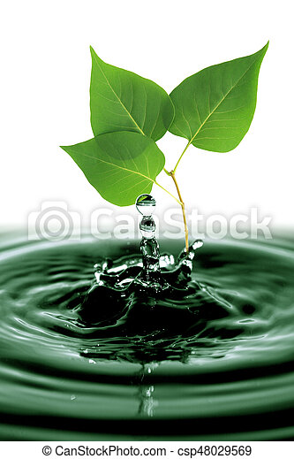 Green Leaves In Water - csp48029569