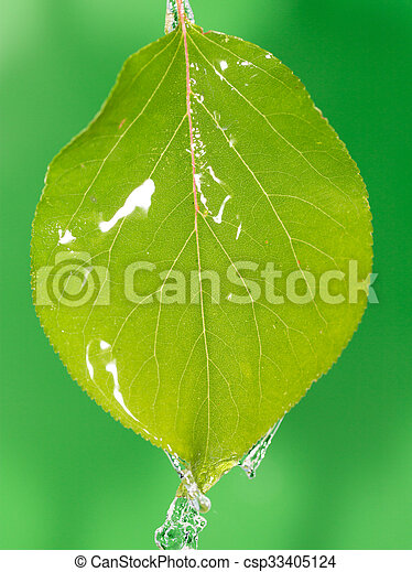 Green leaves in water - csp33405124
