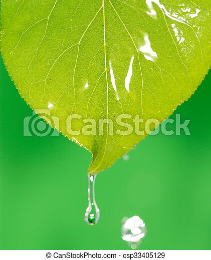 Green leaves in water - csp33405129