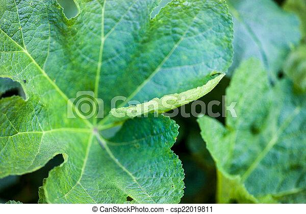 Green leaves of malva - csp22019811