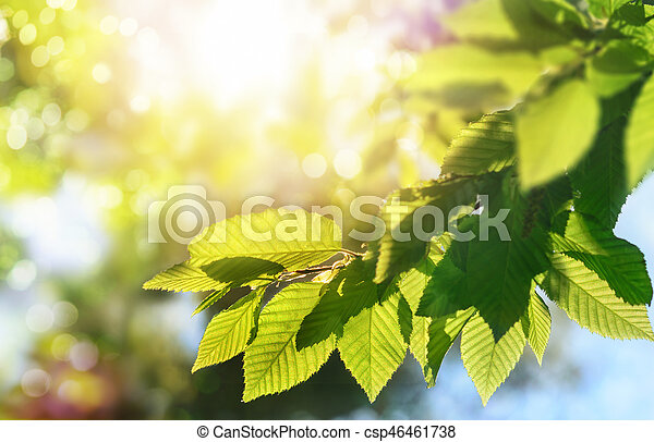 Green leaves on a branch with the sun in the background - csp46461738