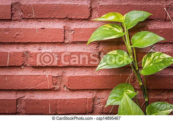 Green leaves on a brick wall - csp14895467