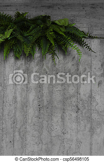 green leaves on a gray wall - csp56498105