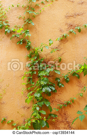 Green leaves on a orange wall - csp13934144