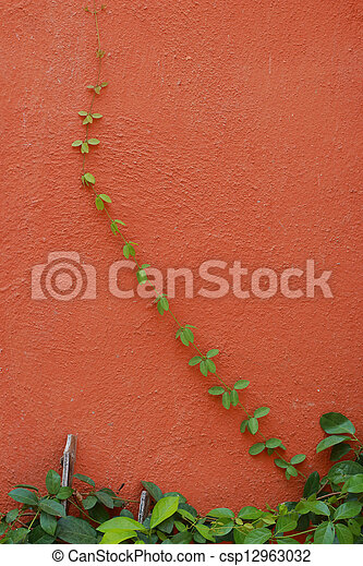 Green leaves on a orange wall - csp12963032