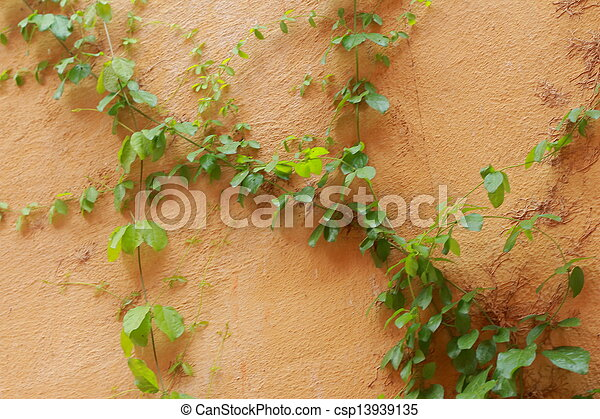 Green leaves on a orange wall - csp13939135