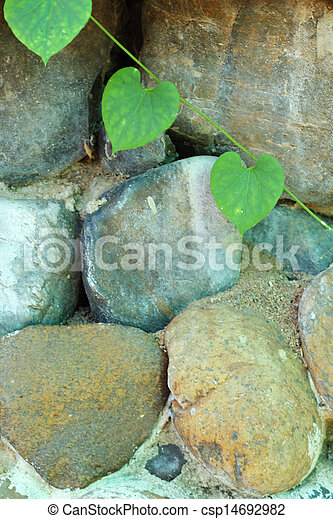 Green leaves on a stone wall. - csp14692982