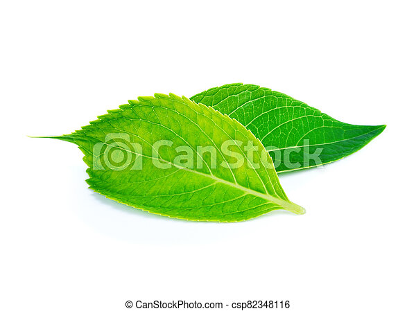 green leaves on a white background - csp82348116