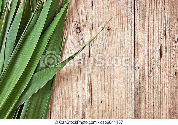green leaves on a wooden wall - csp6641157
