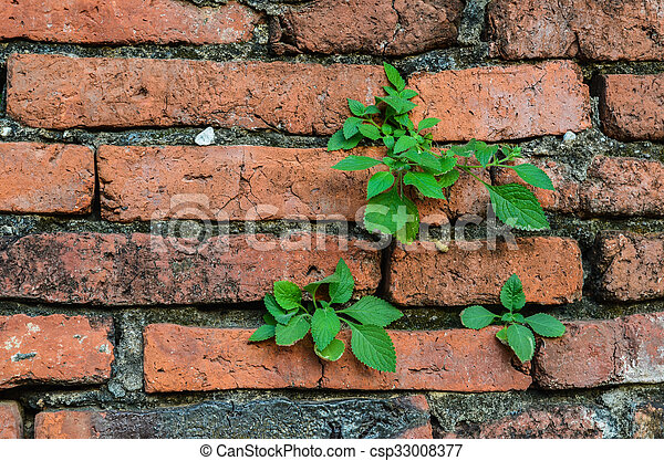 green leaves on brick wall - csp33008377