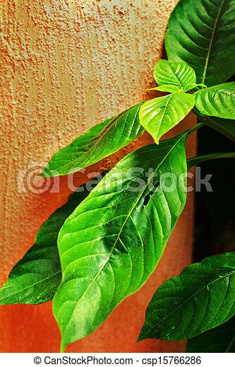 Green leaves on orange wall - csp15766286