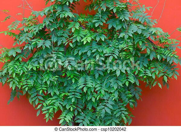 green leaves on orange wall - csp10202042
