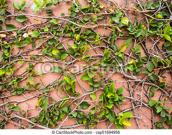 Green leaves on pink cement wall background - csp51694956