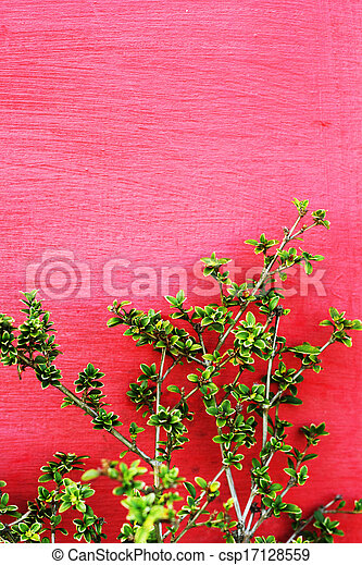 Green leaves on red wall - csp17128559