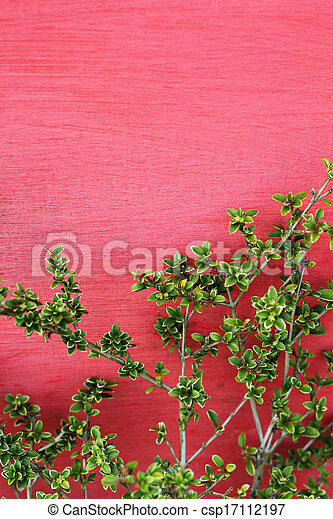 Green leaves on red wall - csp17112197