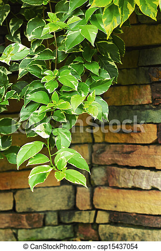 Green leaves on stone background. - csp15437054