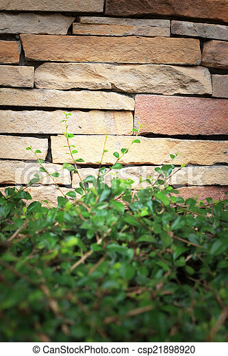 Green leaves on the brick wall - csp21898920