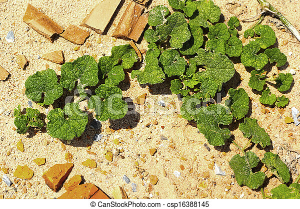 green leaves on the stone floor. - csp16388145