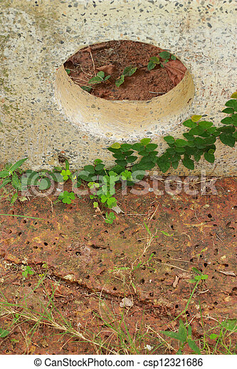 Green leaves on the stone - csp12321686