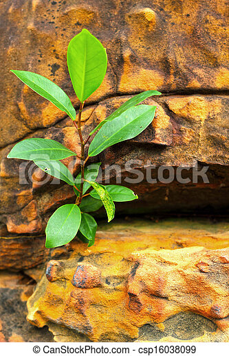 Green leaves on the stone - csp16038099