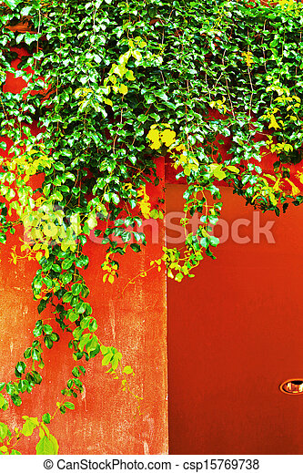 Green leaves on the wall. - csp15769738