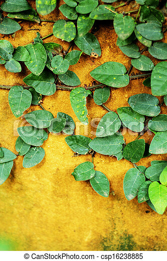 Green leaves on the walls. - csp16238885