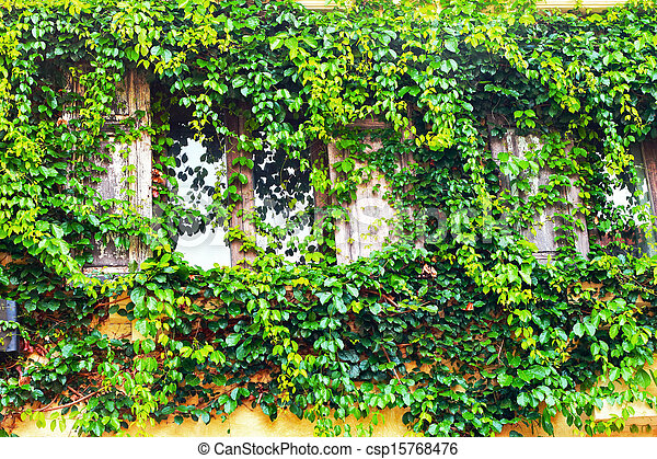 Green leaves on the window - csp15768476