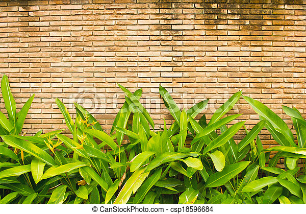 green leaves on wall - csp18596684