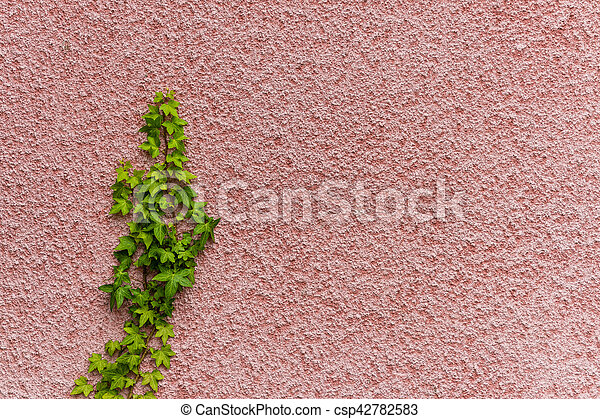 green leaves on wall - csp42782583