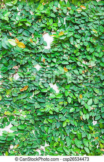 green leaves on wall texture background - csp26534473