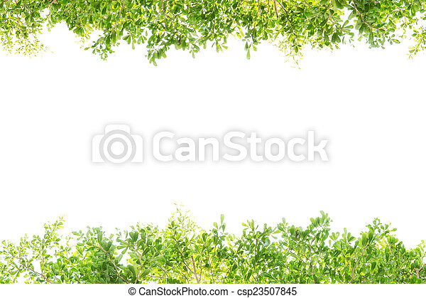 green leaves on white background - csp23507845