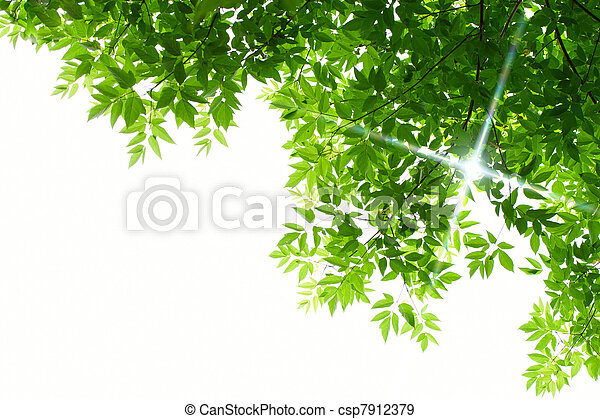 Green leaves on white background - csp7912379
