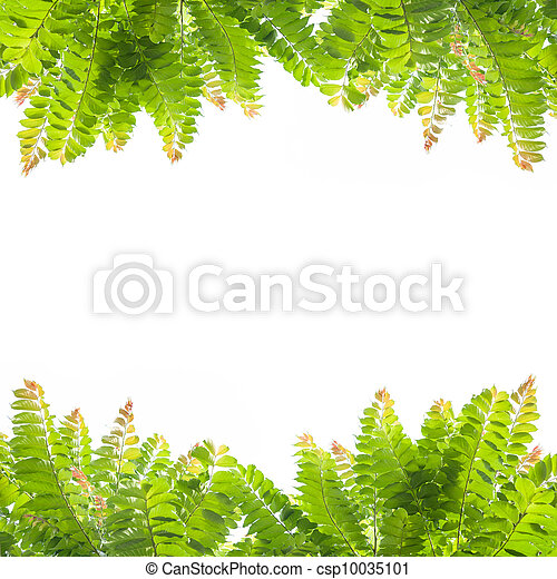 Green leaves on white background. - csp10035101