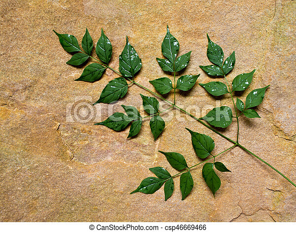 Green leaves placed on the stone slab - csp46669466