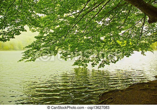 Green leaves reflecting in the water - csp13627083