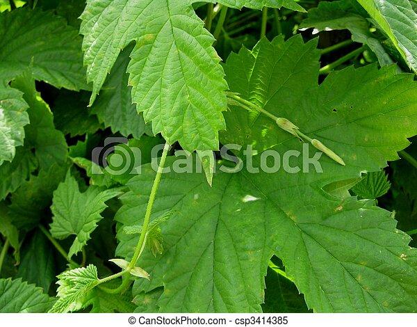 green leaves - csp3414385