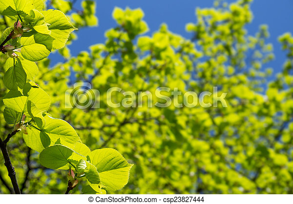 green leaves - csp23827444
