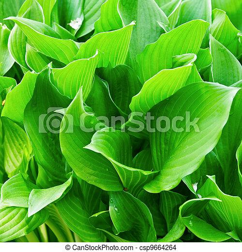 Green leaves - csp9664264