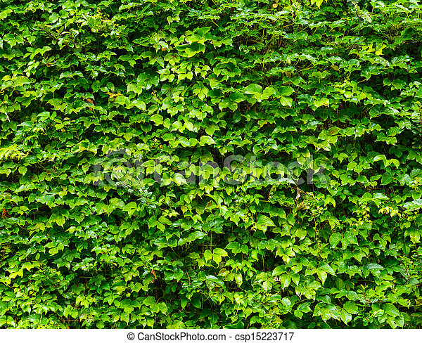 Green leaves wall background - csp15223717