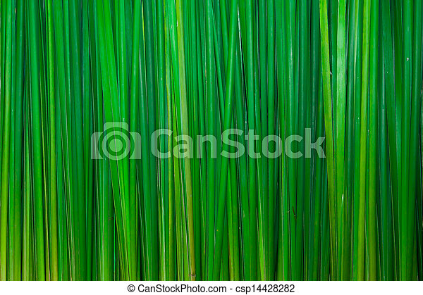 Green leaves wall background - csp14428282